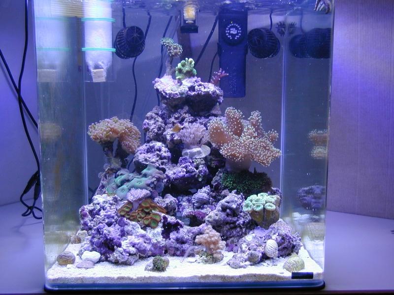 Photos aquarium eau de mer for Achat aquarium eau de mer