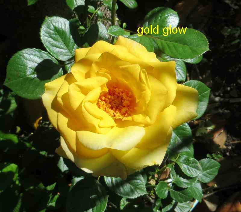 gold_g10.jpg