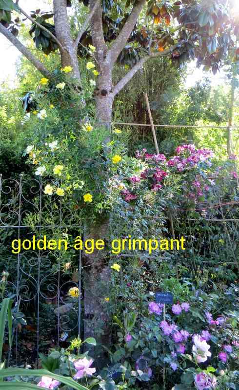 golden13.jpg
