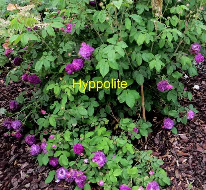 hyppol13.jpg