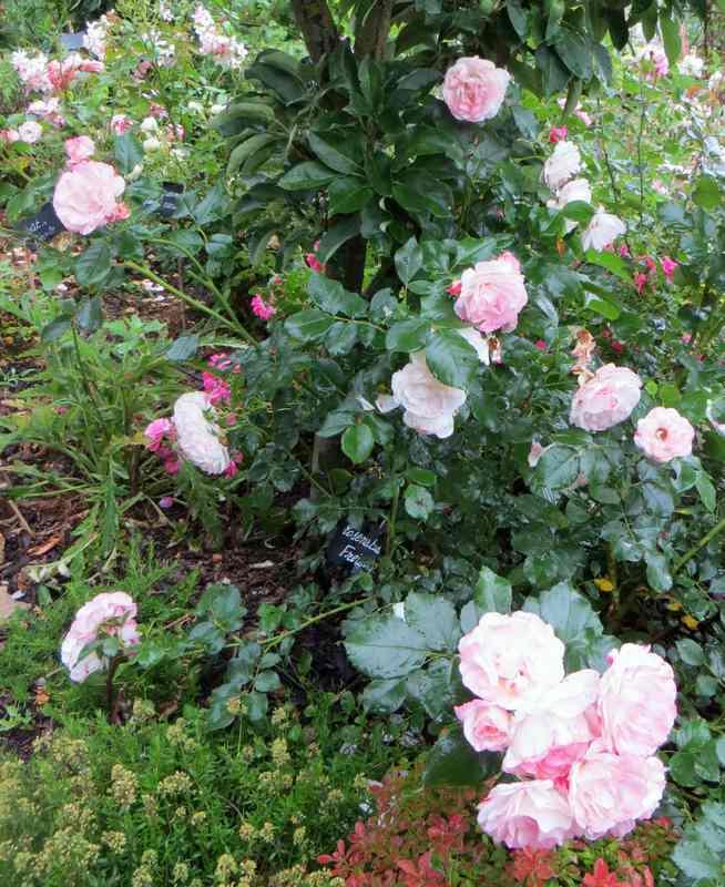 rosens10.jpg